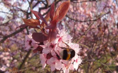 Zeitlos aktuell: Der OM-Treff im Frühjahr 2014